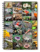 Mushroom Planet - Montgomery County Pa Spiral Notebook