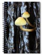 Mushrooms 3 Spiral Notebook
