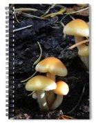 Mushrooms 6 Spiral Notebook