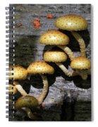 Mushrooms In Relief  Spiral Notebook