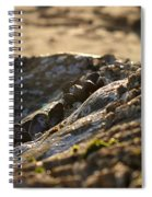 Mussels Sunset Spiral Notebook