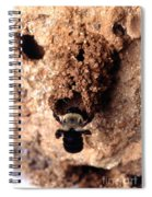 Mustached Mud Bee Spiral Notebook