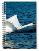 Mute Swan Gaining Momentum Spiral Notebook