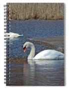 Mute Swans On A Cape Cod Pond - Cygnus Olor - Quissett  Massachusetts Spiral Notebook