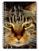 My Bored Cat Spiral Notebook