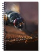 My My My Little Fly Spiral Notebook