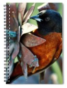 My Orange Taniger Spiral Notebook