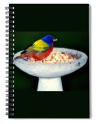 My Painted Bunting Spiral Notebook