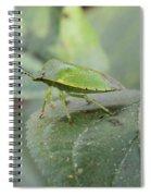 My Pretty Green Stink Bug Spiral Notebook