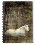 Mystic Forest Spiral Notebook