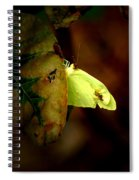 Mystical World Spiral Notebook