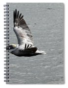 Naples Florida Pelican On The Prowl Spiral Notebook