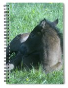 Napping Colt Spiral Notebook