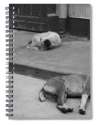 Napping Friends In Valparaiso Spiral Notebook