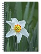 Narcissus In The Rain Spiral Notebook