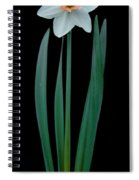Narcissus Passionale Spiral Notebook