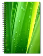 Natural Abstract 24 Spiral Notebook