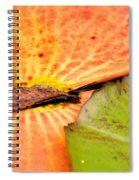 Natural Abstract 40 Spiral Notebook