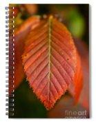 Natural Bronze Spiral Notebook