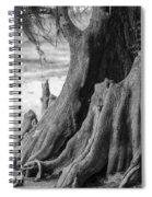 Natural Cypress Spiral Notebook