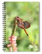 Nature Square - Saddleback Dragonfly Spiral Notebook