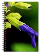 Nature Unfolding Spiral Notebook