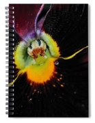 Nature's Amazing Colors - Pansy Spiral Notebook