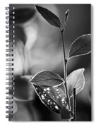 Natures Back Light Spiral Notebook