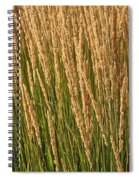 Nature's Own Gold Spiral Notebook