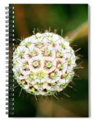 Nature's Perfect Orb Spiral Notebook