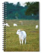 Nelore Beef Cattle Spiral Notebook