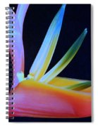 Neon Heliconia Spiral Notebook