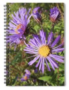 New England Aster Wildflower - Purple Spiral Notebook