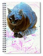 New Kitty Blue Spiral Notebook