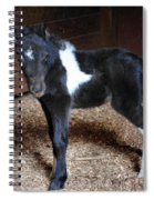 New Life Miniature Pony Spiral Notebook