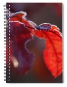Nice Frost Jack Spiral Notebook