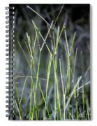 Night Walk Through The High Grass Spiral Notebook