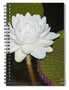 Nocturnal Blossom Of Victoria Lily Spiral Notebook