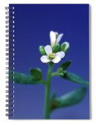 Normal Arabidopsis Plant Spiral Notebook
