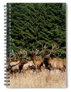 Northcoast Elk Along The 101 Spiral Notebook