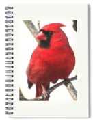 Northern Cardinal Closeup Spiral Notebook