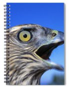 Northern Goshawk With Open Beak Spiral Notebook