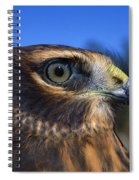 Northern Harrier Raptor In Profile Spiral Notebook