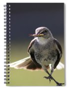 Northern Mockingbird - Lunch Is On The Way Spiral Notebook