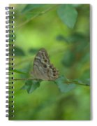 Northern Pearly Eye Butterfly Spiral Notebook