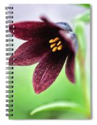 Northern Rice Root Fritillaria Spiral Notebook