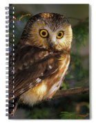 Northern Saw-whet Owl Spiral Notebook