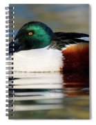 Northern Shoveler Anas Clypeata Male Spiral Notebook