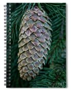Norway Spruce Cone Spiral Notebook