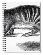 Numbat Spiral Notebook